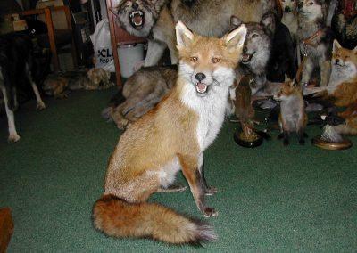 British Mammals 043