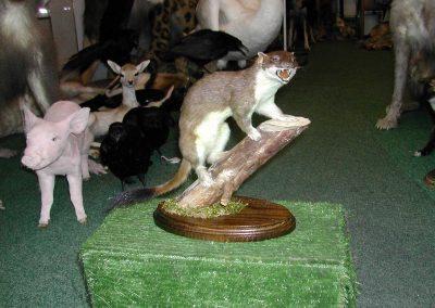 British Mammals 044
