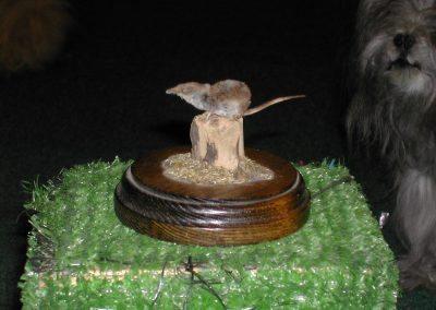 British Mammals 047