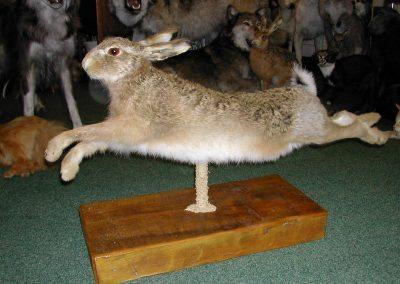 British Mammals 052