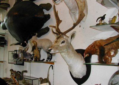 British Mammals 065