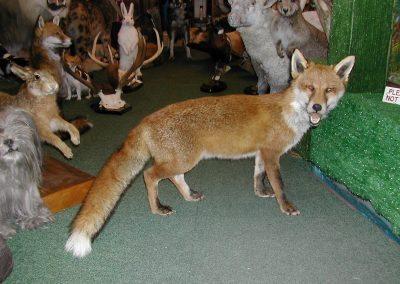 British Mammals 070