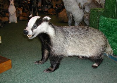 British Mammals 072