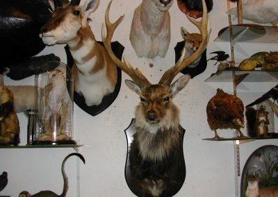 British Mammals 074