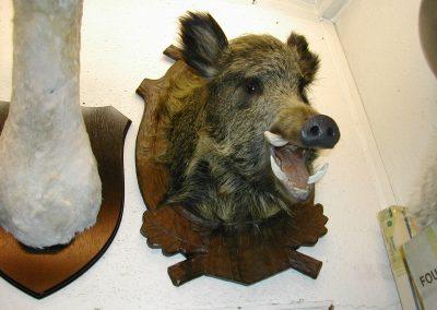 British Mammals 076