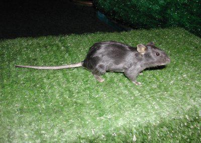 British Mammals 077