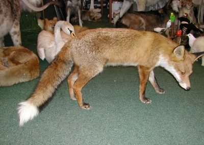 British Mammals 087