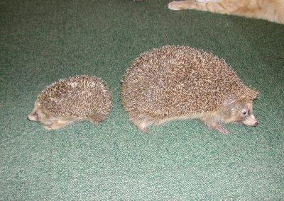 British Mammals 091
