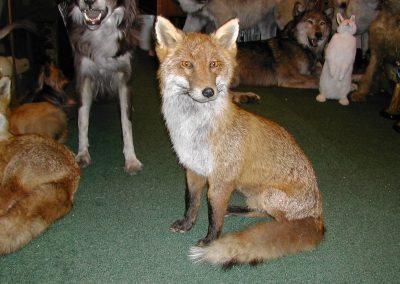 British Mammals 132