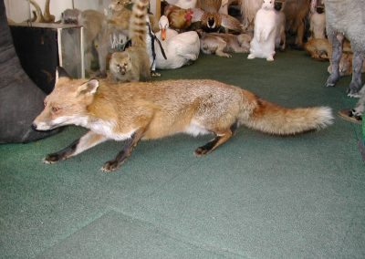 British Mammals 144