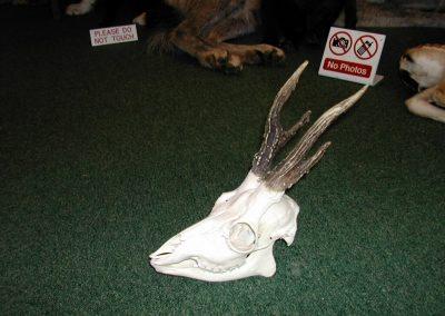 British Mammals 152