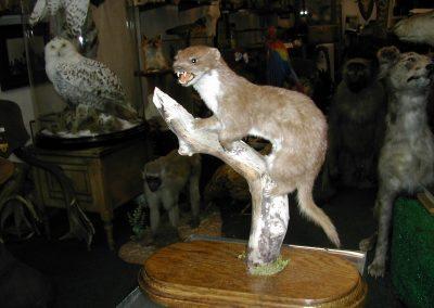 British Mammals 162
