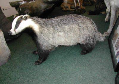 British Mammals 178