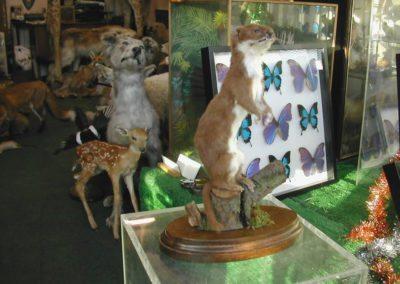 British Mammals 182