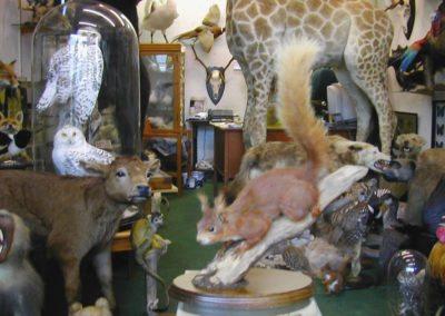 British Mammals 185