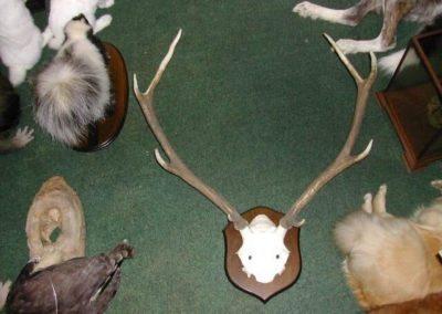 British Mammals 197