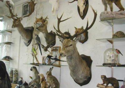 British Mammals 200