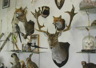 British Mammals 201