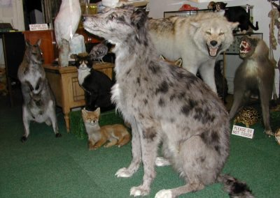 Cats and Dogs 001