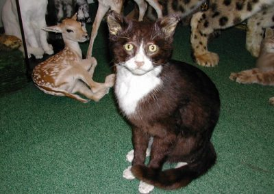 Cats and Dogs 004