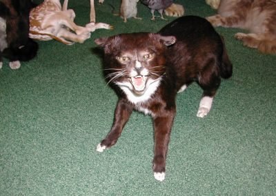 Cats and Dogs 006