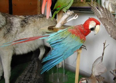 Foreign Birds 001