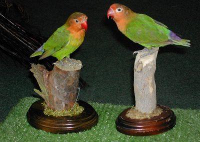 Foreign Birds 003