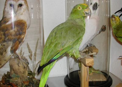 Foreign Birds 012