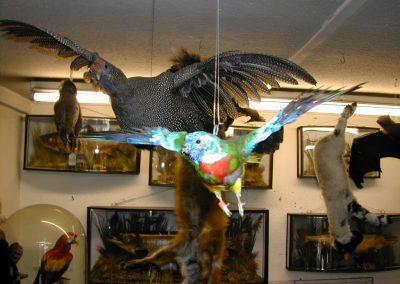 Foreign Birds 013