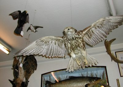 Foreign Birds 014