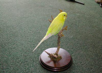 Foreign Birds 016