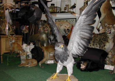 Foreign Birds 018