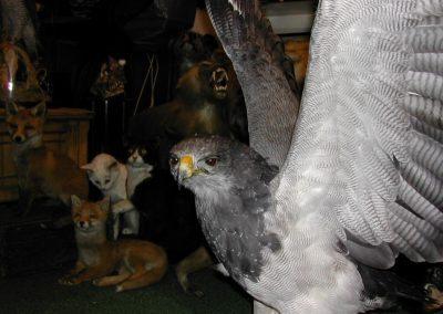 Foreign Birds 019