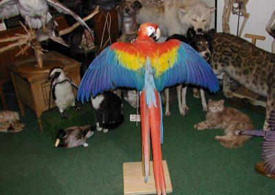 Foreign Birds 020
