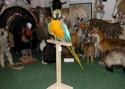 Foreign Birds 023