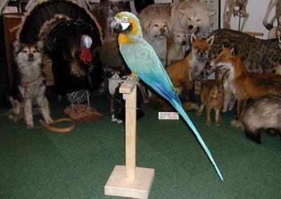 Foreign Birds 024
