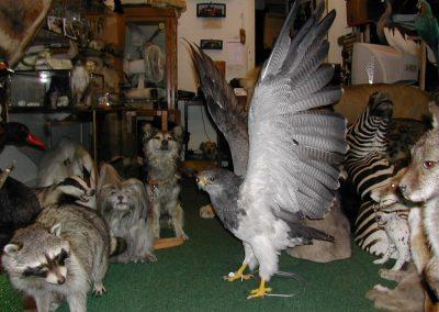 Foreign Birds 026
