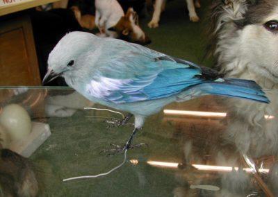 Foreign Birds 028