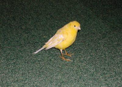 Foreign Birds 029