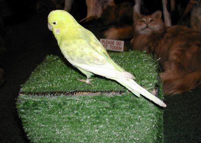 Foreign Birds 031