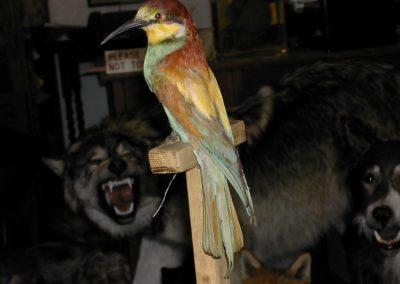Foreign Birds 033