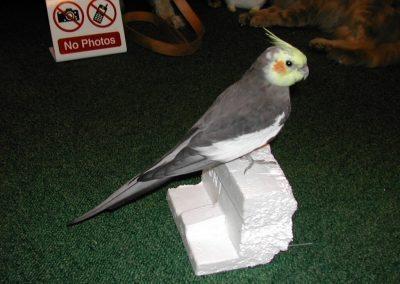 Foreign Birds 034