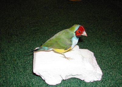 Foreign Birds 035