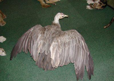 Foreign Birds 037