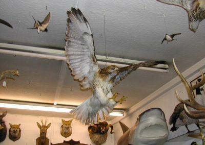 Foreign Birds 038
