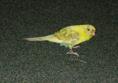Foreign Birds 039