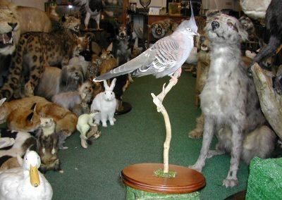 Foreign Birds 048