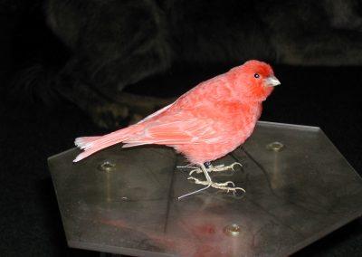 Foreign Birds 049