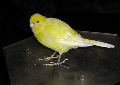 Foreign Birds 050