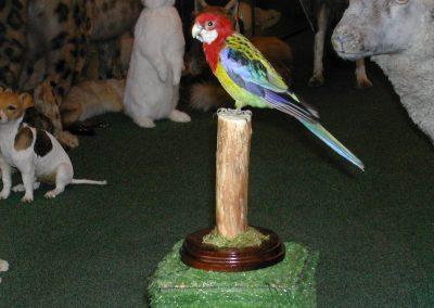 Foreign Birds 053
